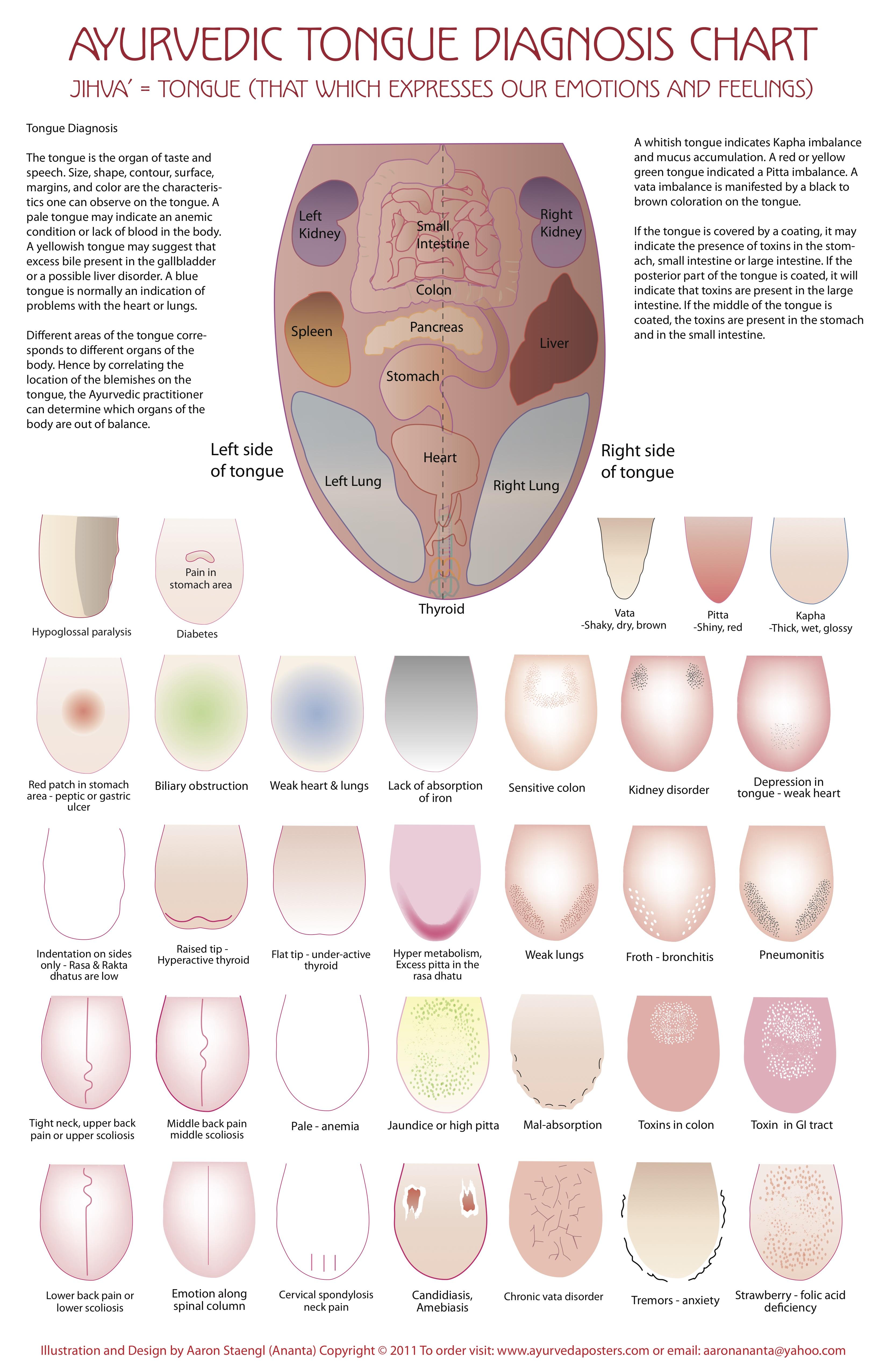 Tongue Diagnosis Chart - Clinical Charts and Supplies